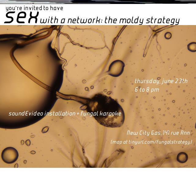 moldystrategy_23_c